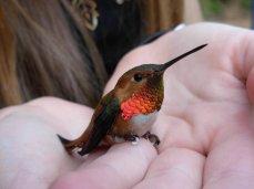 Hummingbird by Selkey Photography / Animals, Plants & Nature / Birds©2007-2015 Selkey via DeviantArt
